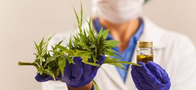 A woman holding a marijuana leaf and CBD oil