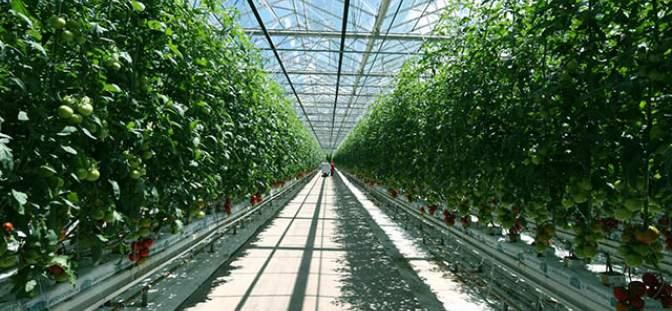 Marijuana grow-space