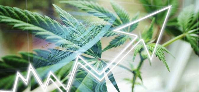 Icc International Cannabis