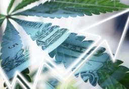 Cannabis stocks symbol up