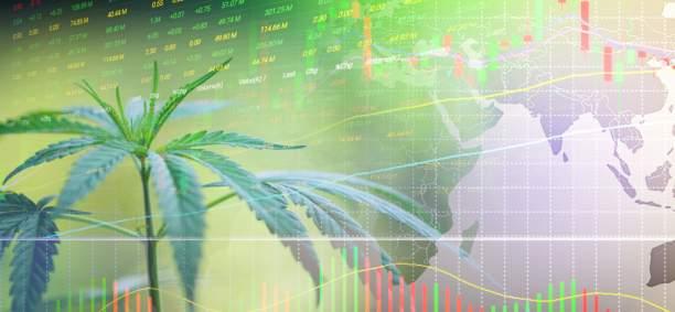 cannabis analytics