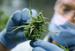 Asterion Cannabis prepares to break ground on facility site in Australia