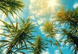 BevCanna Enterprises Inc - BevCanna teams ups with Clearwater CannGrow to produce organic, sun-grown cannabis