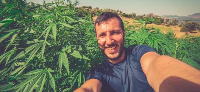 Man in a field of cannabis