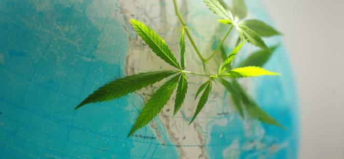Cannabis on a globe