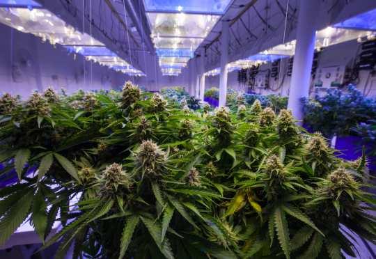 Green Organic Dutchman Holdings Ltd. -