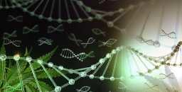 Zelira Therapeutics Ltd - Zelira Therapeutics accelerates towards commercialisation in 2020