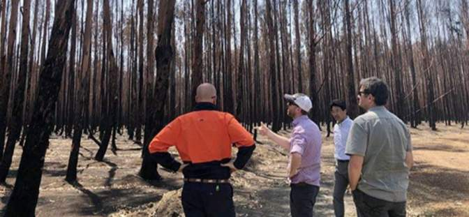 Kangaroo Island Plantation Timbers Ltd - Kangaroo Island Plantation Timbers finalises building insurance for $5.9 million