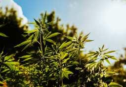 Helix Technologies - Helix Technologies launches online medical marijuana reciprocity portal in New Mexico