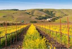 Naked Wines Plc, vineyard, wine, growing, california