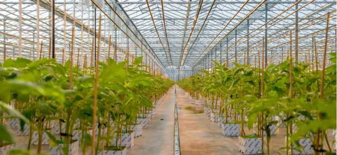 AgraFlora Organics International Inc. - AgraFlora Organics anticipates first sales and revenue in summer of 2021