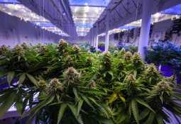 Delta 9 Cannabis Inc. -