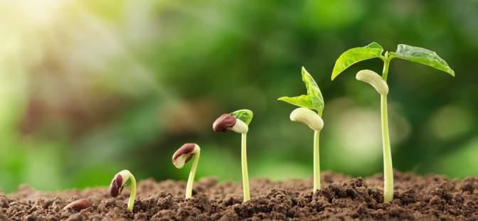 Plant Health Care plc -
