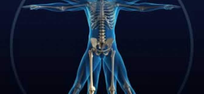 skeletal_xray_350_4c6012dd2090e.jpg